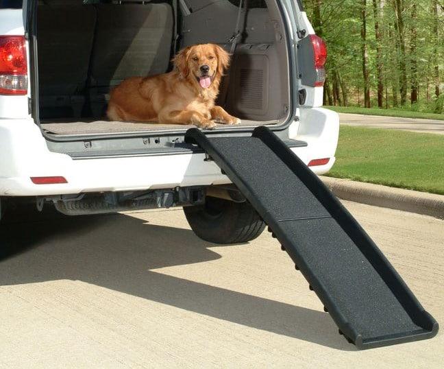 Un chien qui descend sur une rampe depuis le coffre d'une voiture